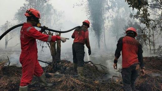Penegak Hukum Diminta Tegas Tindak Pelaku Pembakaran Hutan