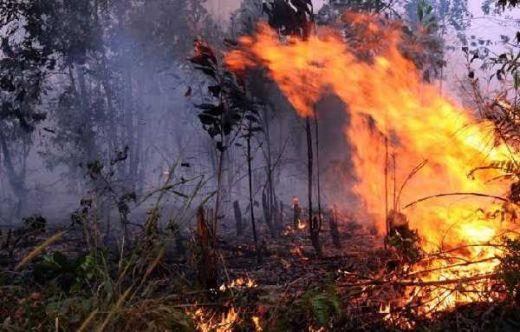BNPB: Kebakaran Lahan dan Hutan Terus Meluas di Kalbar, Riau, Sumut, Sumbar dan Daerah Lainnya