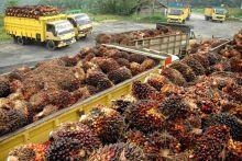Pengamat: Industri Sawit Dapat Jadi Sumber Pemasukan Ekonomi Negara