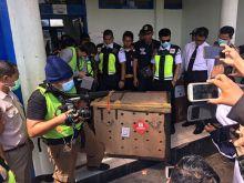 Sriwijaya Air Group Dukung Repatriasi Orangutan Kalimantan
