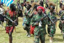 Pemerintah Didesak Tetapkan OPM sebagai Organisasi Teroris