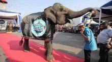 Gubernur Lampung Undang Wisatawan ke Festival Way Kambas