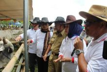 Pemerintah Targetkan Lampung Penyuplai Sapi Nasional