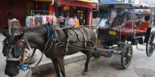 Sepi Wisatawan, Kusir Andong di Yogyakarta Terpaksa Jual Kuda Demi Bertahan Hidup