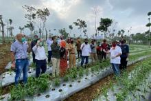 Perkuat Ekonomi Desa, DPD Dukung Penerapan Investasi Model Kemitraan dengan Petani