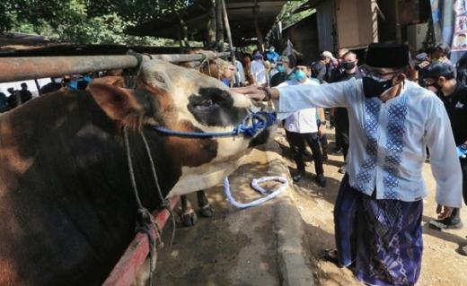 Gandeng Ormas Islam di 17 Provinsi, Sandiaga Uno Berbagi 1.000 Hewan Kurban