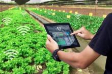 Kaum Milenial Didorong Majukan bidang Pertanian