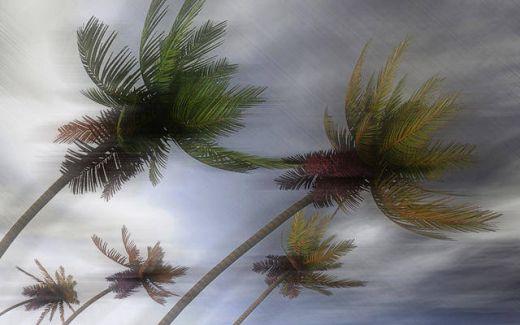 Ratusan Rumah dan Pohon Tumbang Diterjang Angin Kencang di Bojonegoro dan Jogjakarta