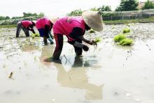 Pahala Besar untuk Para Petani Menurut Rasulullah SAW