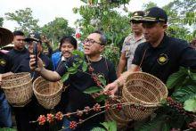 Akhir Pekan, Zulkifli Hasan Panen Raya Bareng Petani Kopi Lampung Barat