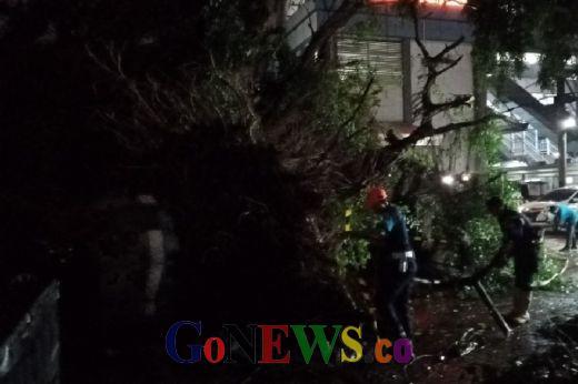 Tak Ada Korban Jiwa dalam Insiden Pohon Tumbang di Stasiun Serpong, Aktifitas Kereta Berjalan Normal