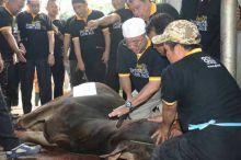 Potong 58 Ribu Hewan Kurban, PKS Seluruh Indonesia Distribusikan Daging ke Lombok